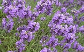 ... zahrad - Zahrady - Zahradnictví a květinářství U Benešů